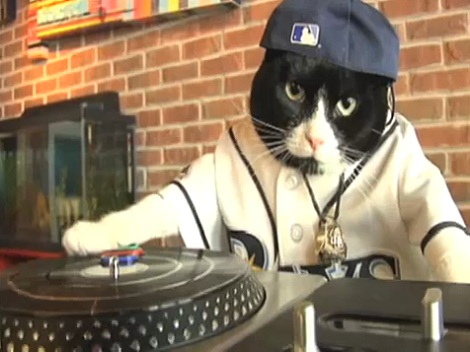 dj kitty3